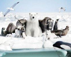 Mroźny Świat - Zwierzęta - plakat