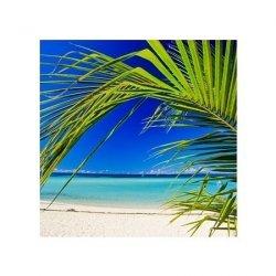 Plaża i palma - reprodukcja