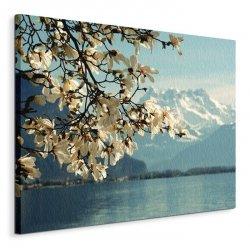 Obraz na płótnie - Kwiaty - Blossoming Magnolia, Lake Geneva, Switzerland - 60x80 cm