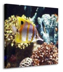 Ryba motylowa - Obraz na płótnie