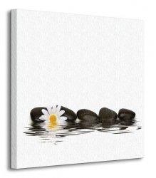 Spa - kamienie i stokrotka - Obraz na płótnie