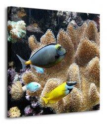 Poissons d'eau de mer - Obraz na płótnie