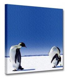 Pingwiny, globalne ocieplenie - Obraz na płótnie