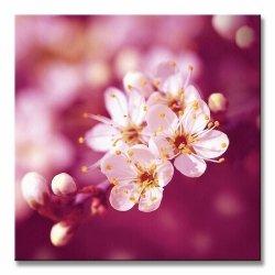Obraz na płótnie - Plum Blossom - 40x40 cm