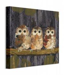 Three Tawny Owls - obraz na płótnie