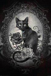 Plakat - Alchemy (Paracelcus) - Piękny Kot