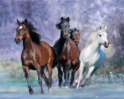 Konie (w biegu) - plakat