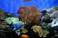Fototapeta na ścianę - Ryby Akwariowe - 175x115 cm