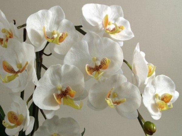Sztuczne storczyki - Orchidea - W doniczce - Sklep internetowy Decoart24.pl