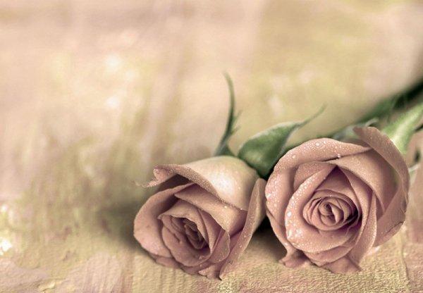 Fototapeta ścienna - Samotne róże - 366x254 cm