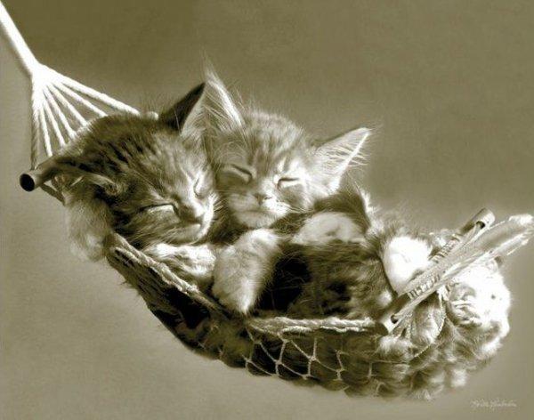 Kotki śpiące w hamaku - plakat