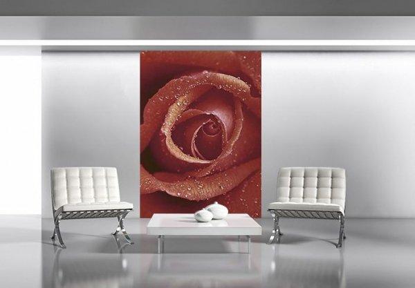 Fototapeta na ścianę - Czerwona Róża - Sklep decoart24.pl