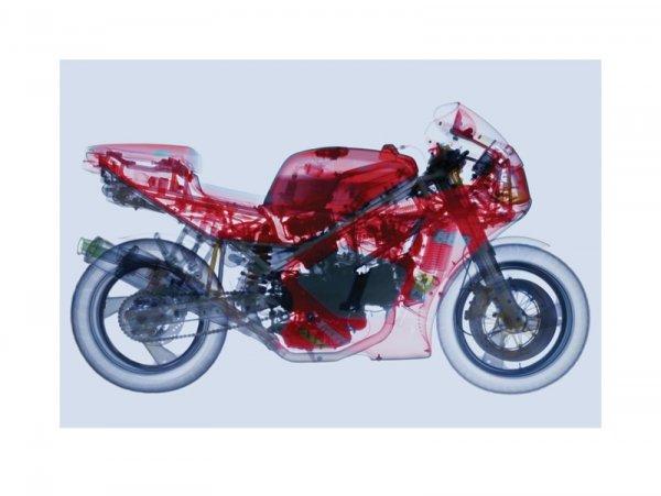 X-ray Bike - reprodukcja