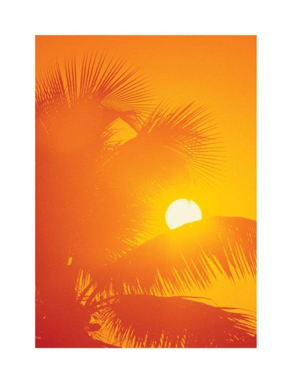 Pomarańczowe palmy - reprodukcja