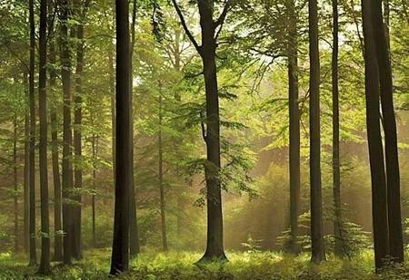 Fototapeta Las - 366x254 cm - Sklep decoart24.pl