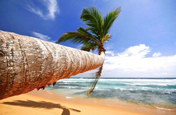 Fototapeta na ścianę - Tropikalna Plaża - 175x115 cm