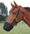 WALDHAUSEN Kaganiec dla konia