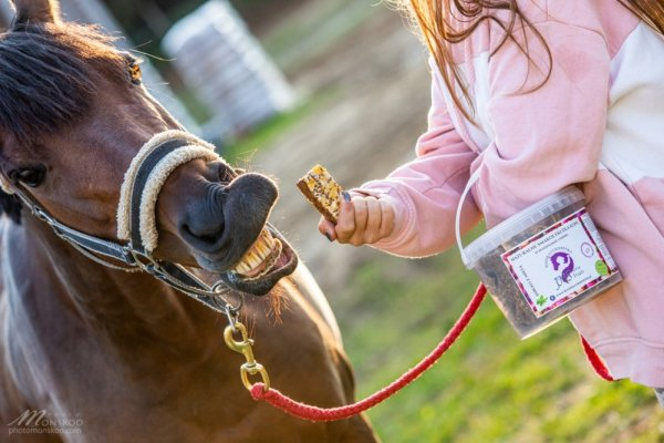 KOŃSKA CUKIERENKA FIT Smakołyki/Batoniki naturalne dla koni 24H