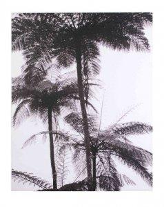 Obraz 40x50x1,5cm PALMY